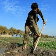 Farmer in Afghanistan