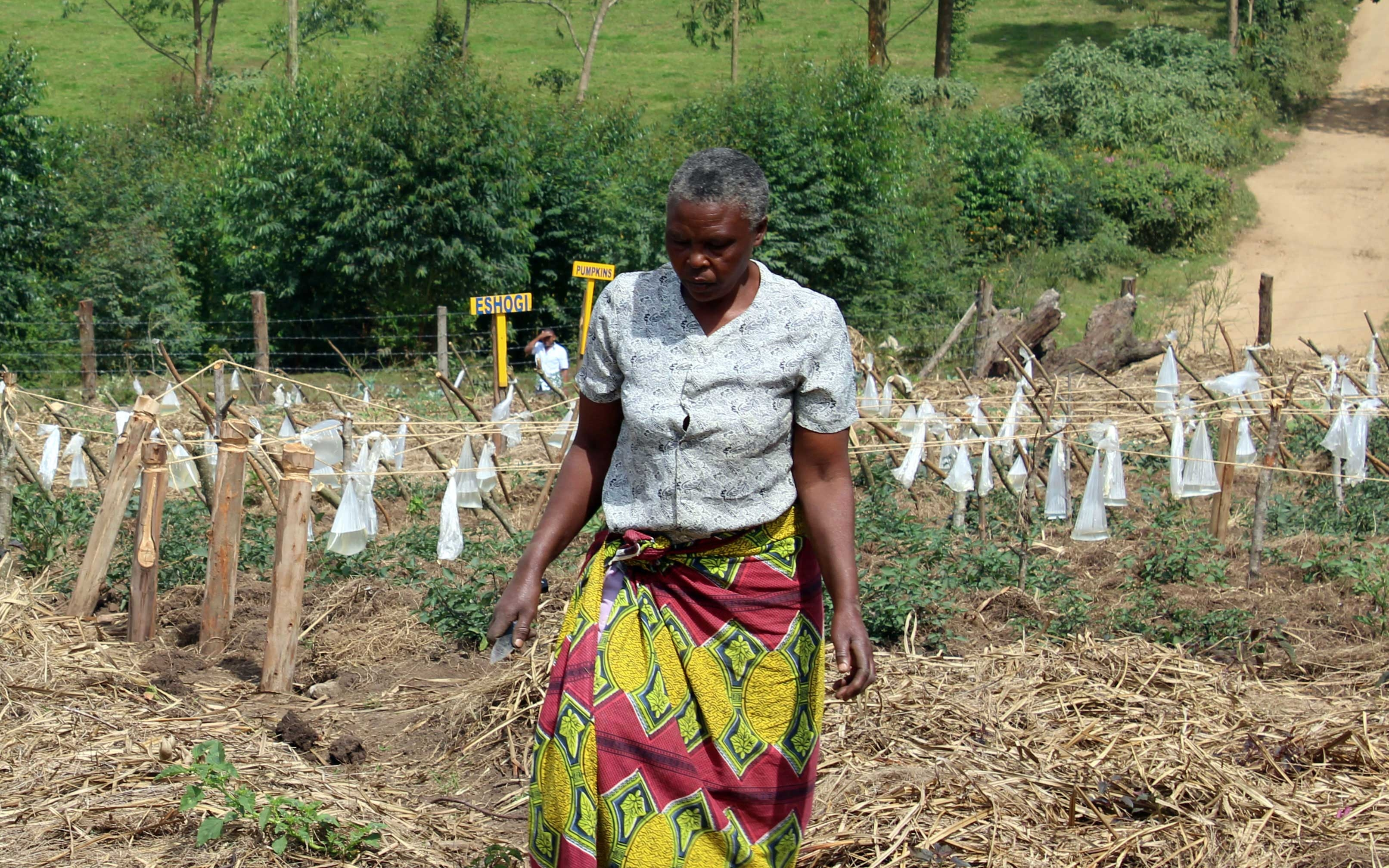 Empower Smallholder Farmers