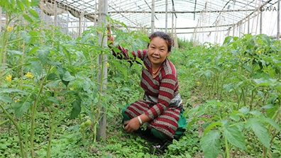 Woman Farmer - AFA