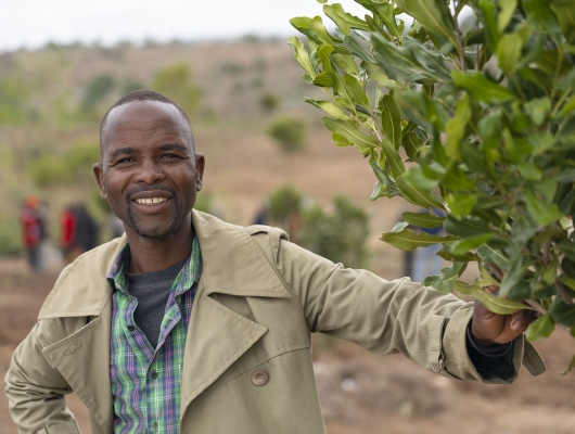 Global Tea, one of Malawi's top macadamia producers, saw an opportunity to help small-scale farmers in Malawi improve their livelihoods while also securing more macadamia nut output to meet consumers' demand.