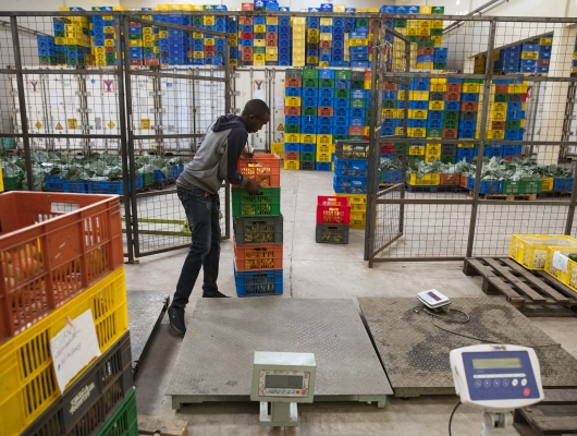 Twiga's Technology Connects Kenyan Smallholders with Markets