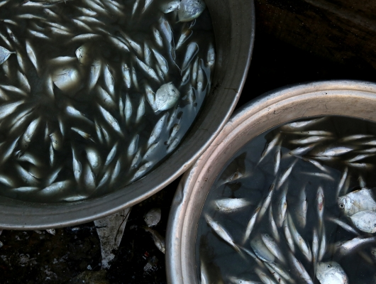 Fish - Aquaculture