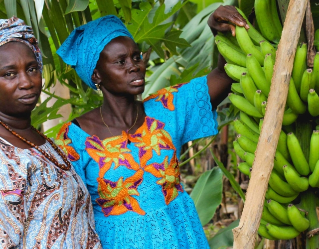 banana farmers in Saal
